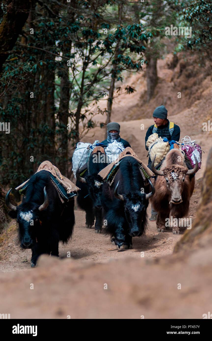 Asia, Nepal, Himalaya region, Sagarmatha, Namche Bazar, Everest Base Camp Trekking - Stock Image
