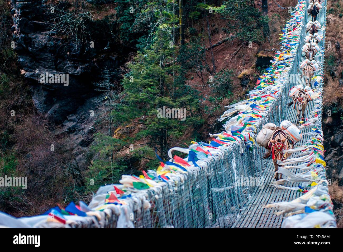 Asia, Nepal, Himalaya region, Khumbu, Sagarmatha National Park, Everest Base Camp Trekking - Stock Image