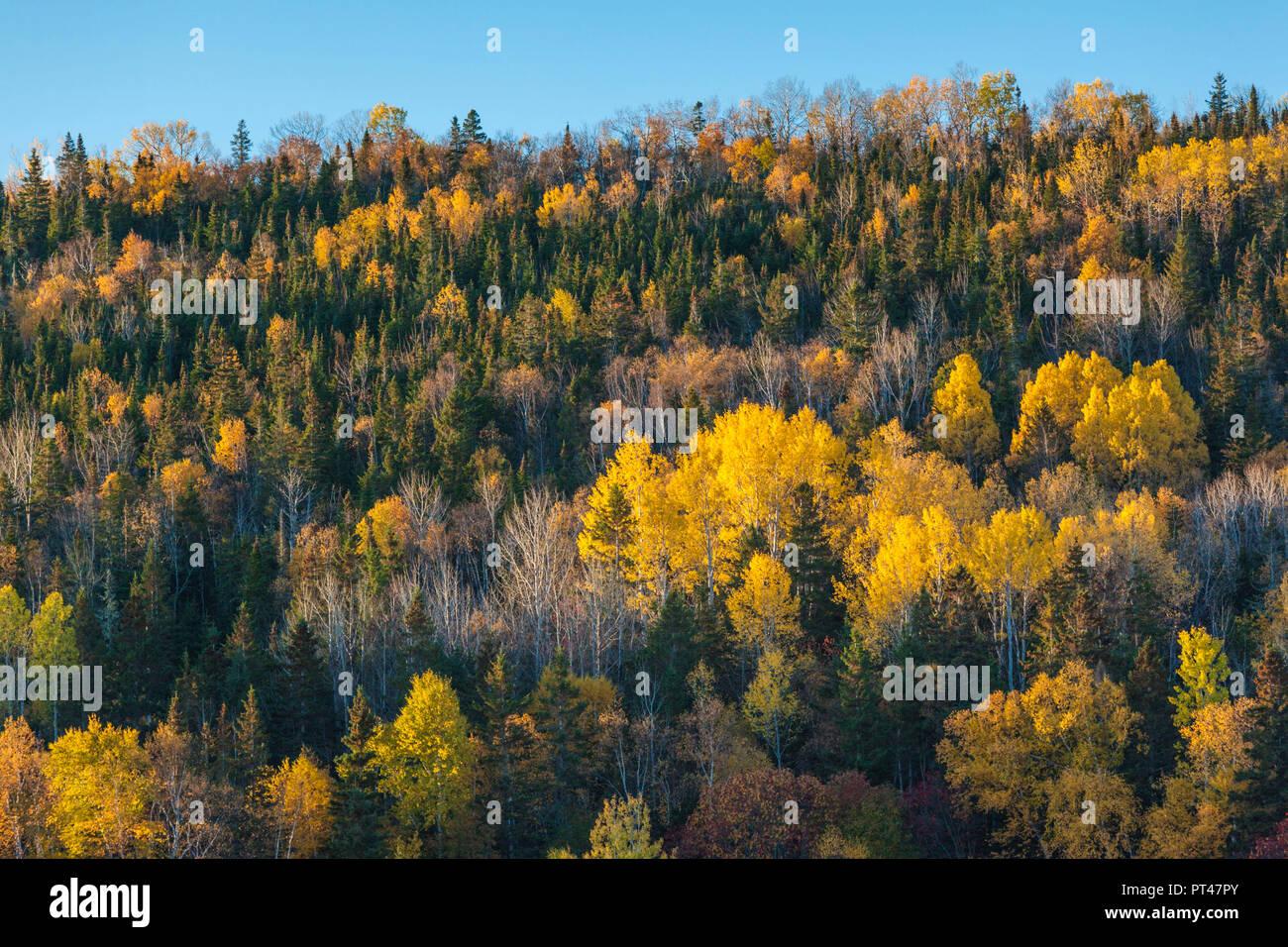 Canada, Quebec, Gaspe Peninsula, Gaspe, autumn, trees - Stock Image