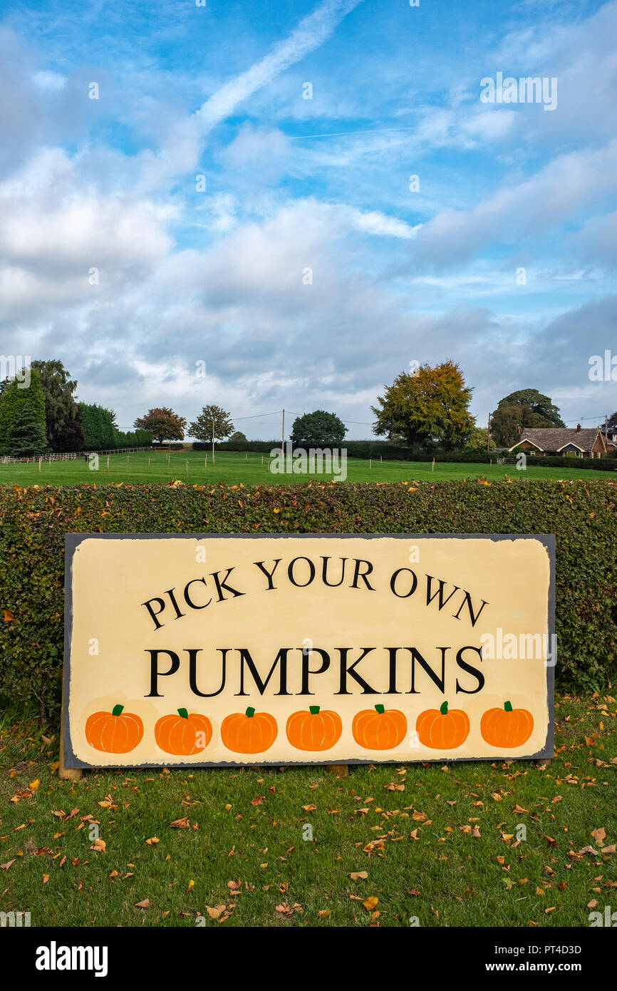 Pick your own pumpkins advert at Wheelock farm in Cheshire UK - Stock Image