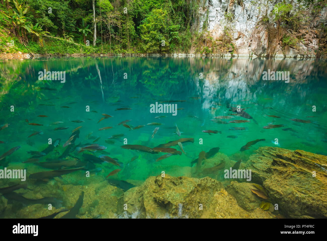 Lom Phu Kiew pond with crystal clear water and a group of fish a famous tourist attraction of Lampang province, Thailand - Stock Image