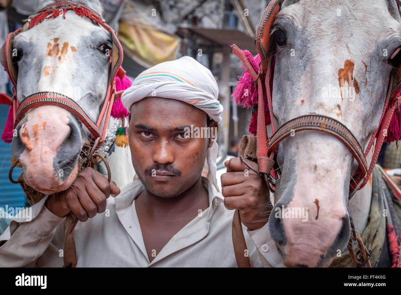 Nukra Horse Images, Stock Photos & Vectors | Shutterstock