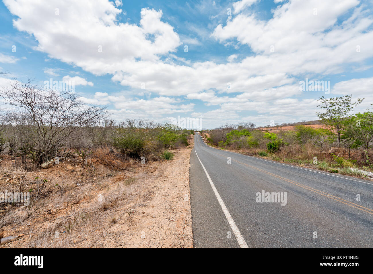 Cabaceiras, Paraíba, Brazil - February, 2018: Road to infinite with Cactus in a Caatinga Biome at Northeast of Brazil Stock Photo