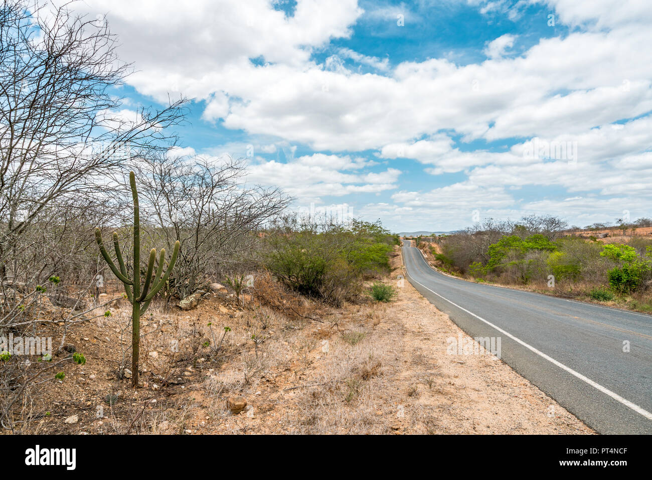 Cabaceiras, Paraíba, Brazil - February, 2018: Road to infinite with Cactus in a Caatinga Biome at Northeast of Brazil - Stock Image