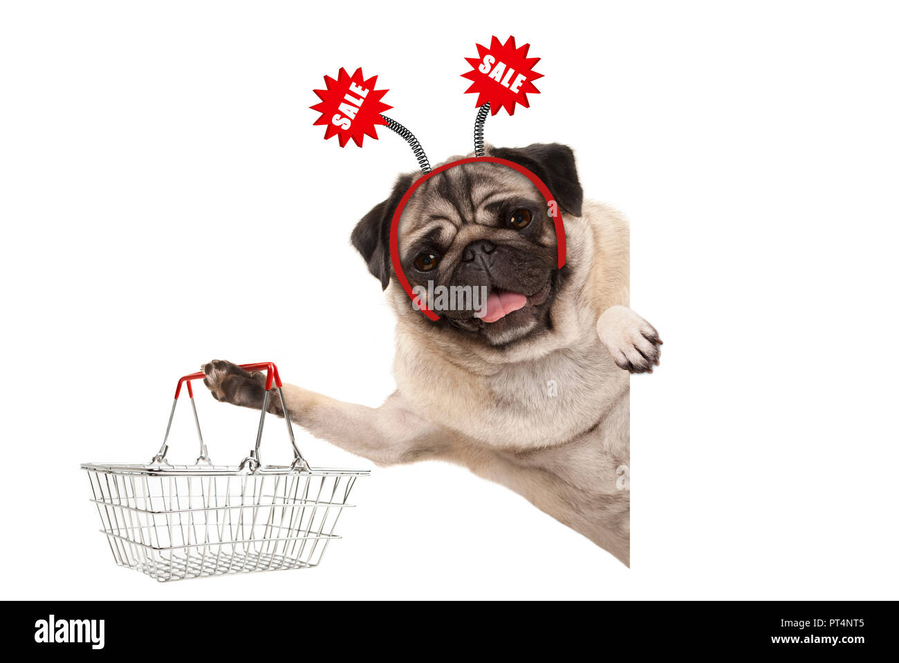 happy smiling pug puppy dog, holding up shopping basket, wearing diadem with red sale sign, isolated on white background Stock Photo