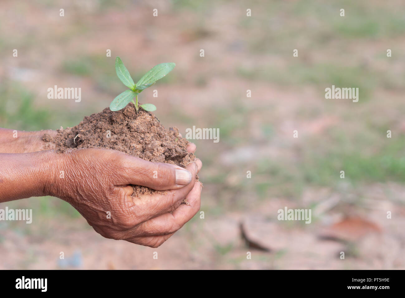 small plants and soil in old hands with bokeh and blurred background Stock Photo
