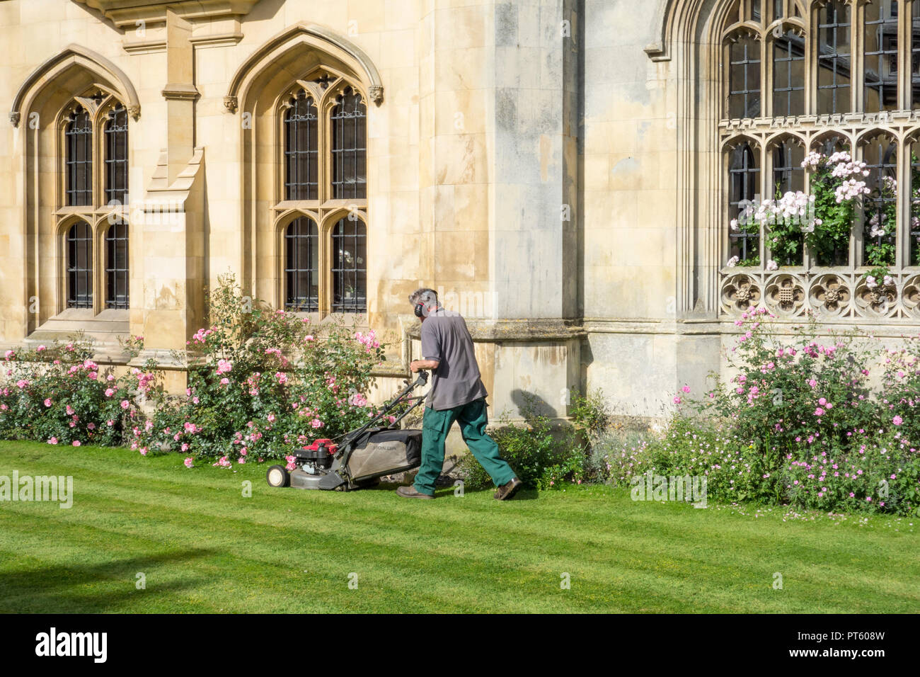 Gardner mowing lawn outside King's College, University of Cambridge, UK - Stock Image