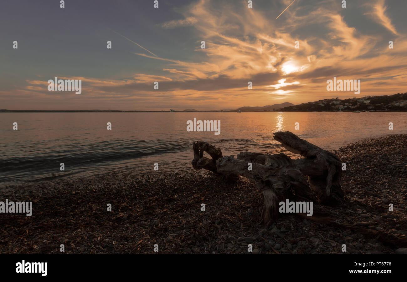 Europa Spanien  Nord Mallorca , Sonnenuntergang in Alcanada, Reste eines abgestorbenen Baumes im Meer - Stock Image