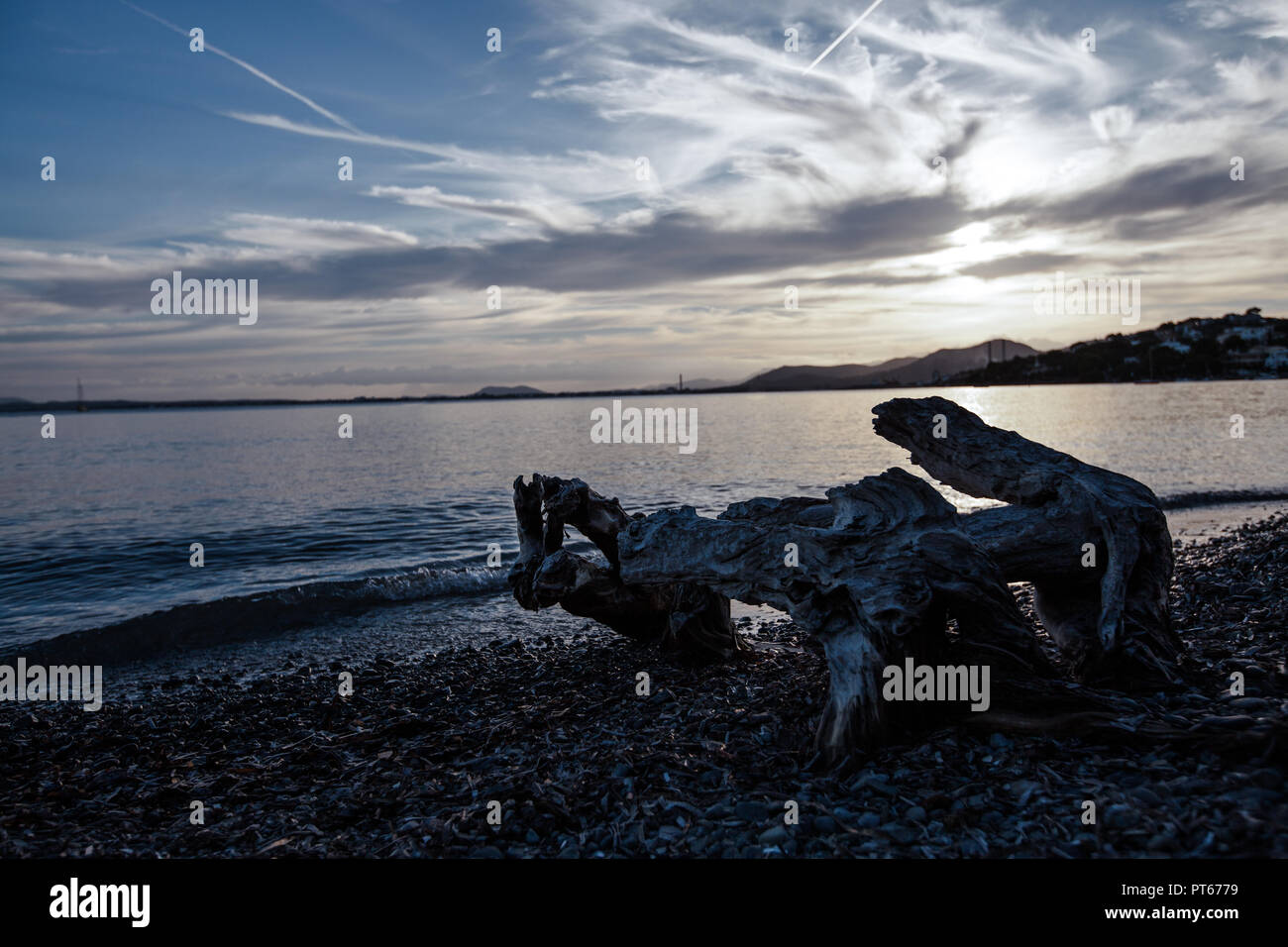 Europe Spain North Mallorca , sunset in Alcanada, remains of a dead tree in the sea - Stock Image