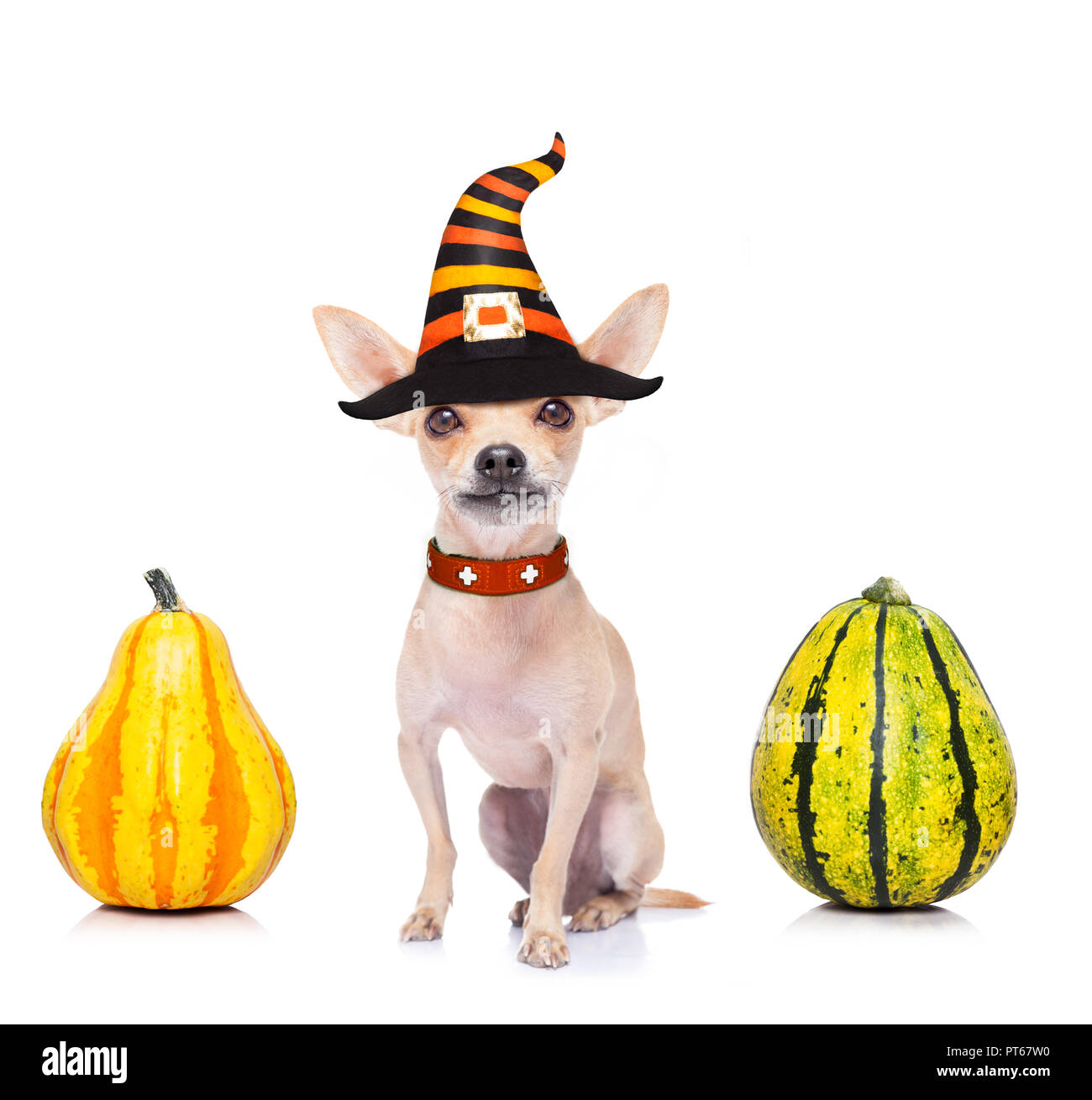 dog sitting as a ghost for halloween with pumpkin lantern or