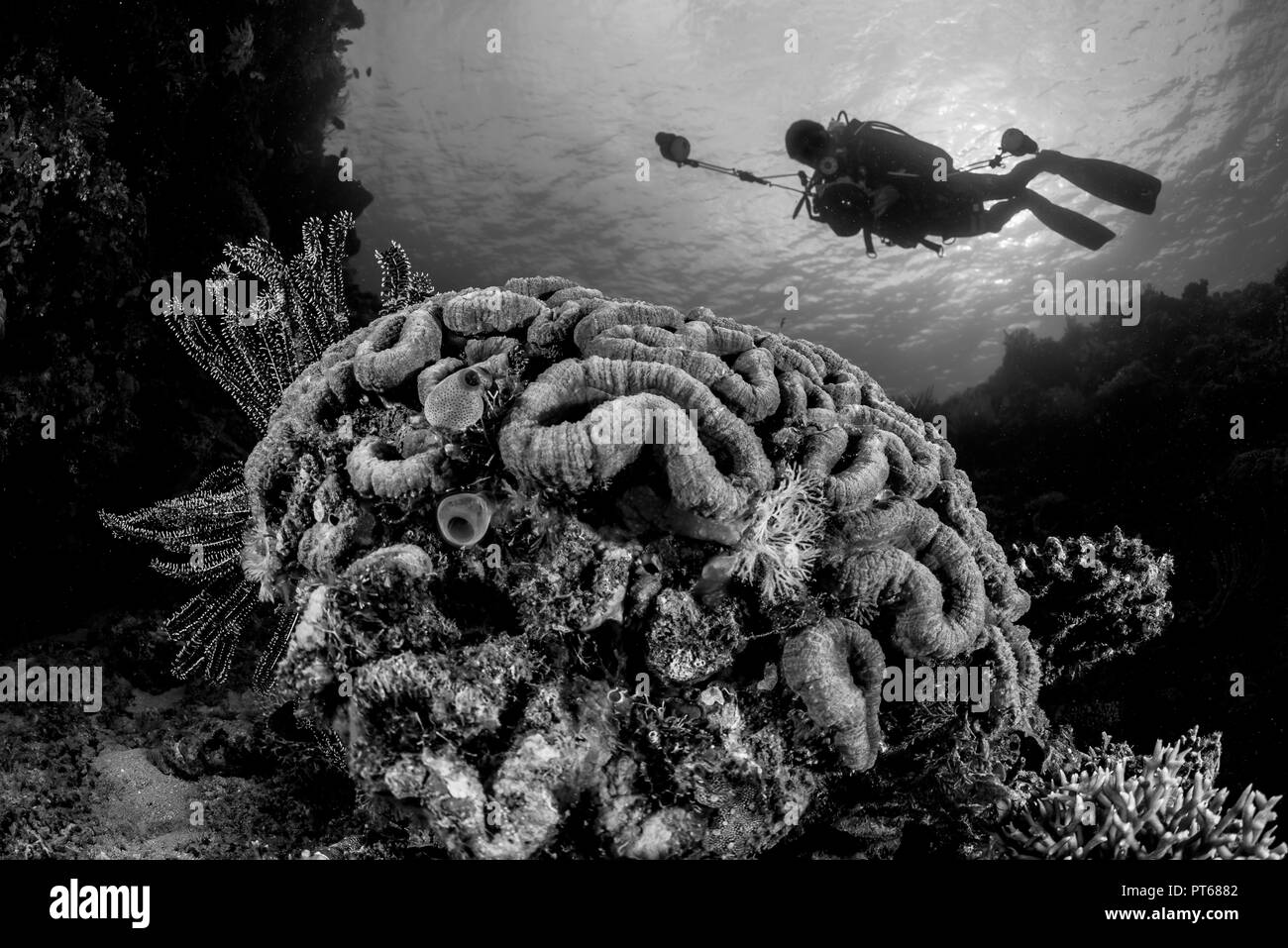 reef coral formation with diver - Stock Image