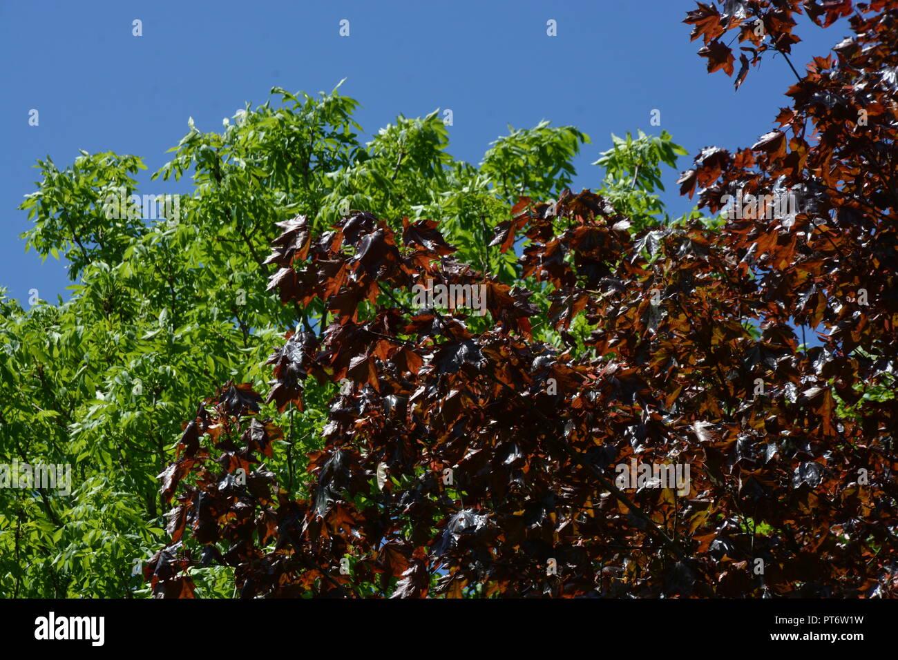 Bäume     Blätter     Himmel - Stock Image