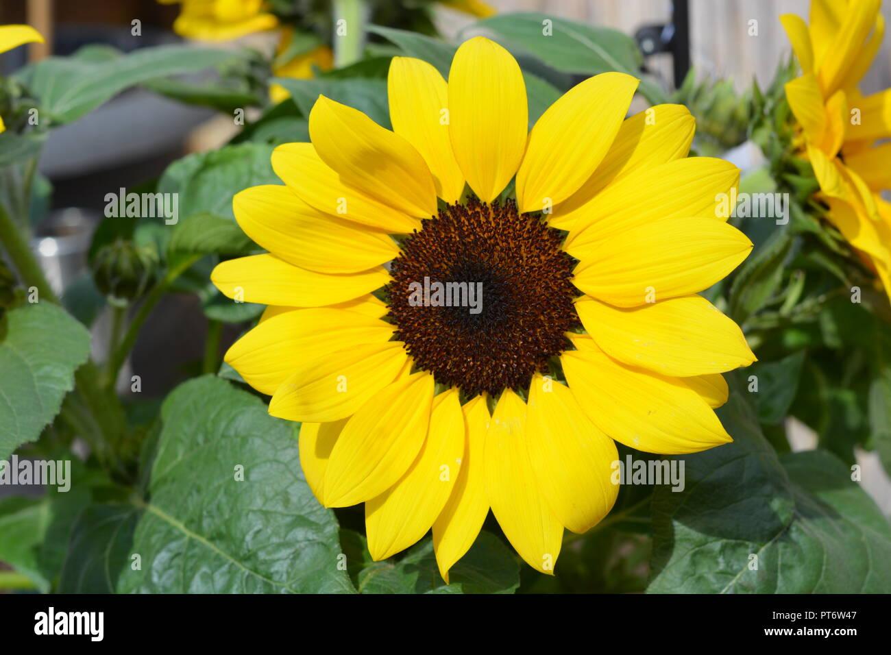 Blume    Blüte - Stock Image