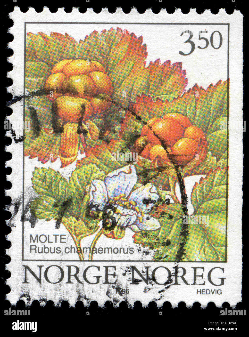 Postmarked stamp from Norway in the Wild Berries series issued in Stock Photo