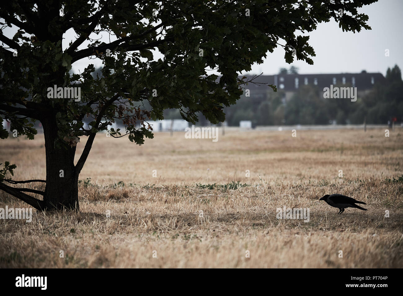 Silhouettes of a raven and a tree on the Tempelhofer Feld on a dull autumn day - Stock Image