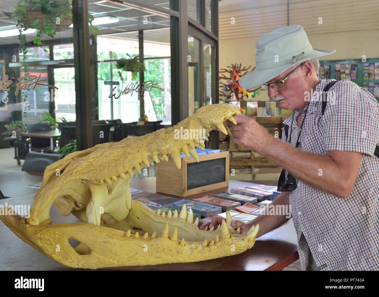 Tourist opening skull of crocodile in the Territory Wildlife Park, Cox Peninsula Rd, Berry Springs Darwin NT 0838, Australia Stock Photo