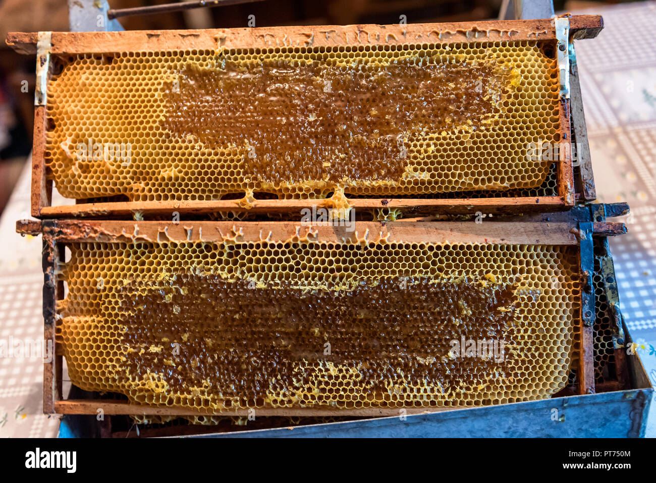 Bee Honeycomb Frame with unfinished Honey and parts of wax - Stock Image