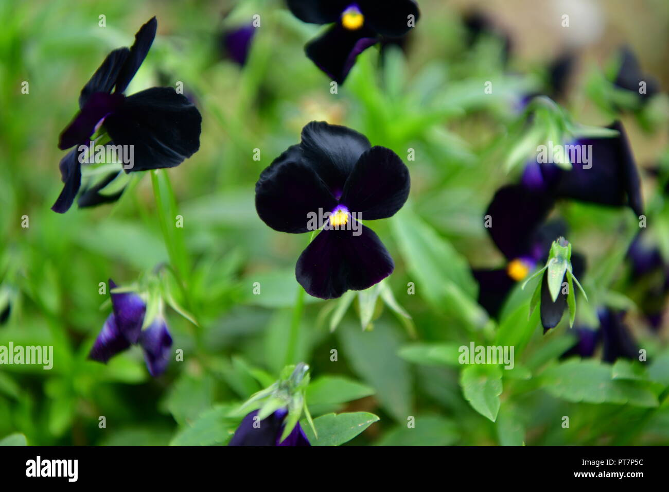 Garden with flowers of different colors stock photos garden with beautiful garden with well kept flowers vegetables herbs the effect of hard work on the izmirmasajfo