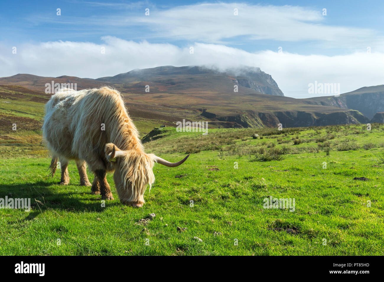Landscape view of The Oa with a Highland cow grazing in the foreground, Islay, Scotland, UK, September 2017 Stock Photo