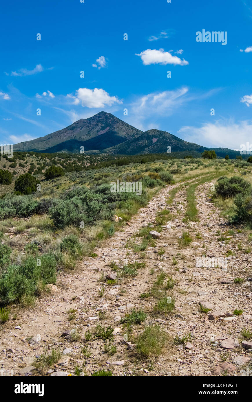 A narrow dirt road and trail head through the sagebrush and juniper trees of the Utah West Desert. In the distance is a small mountain with white, whi Stock Photo