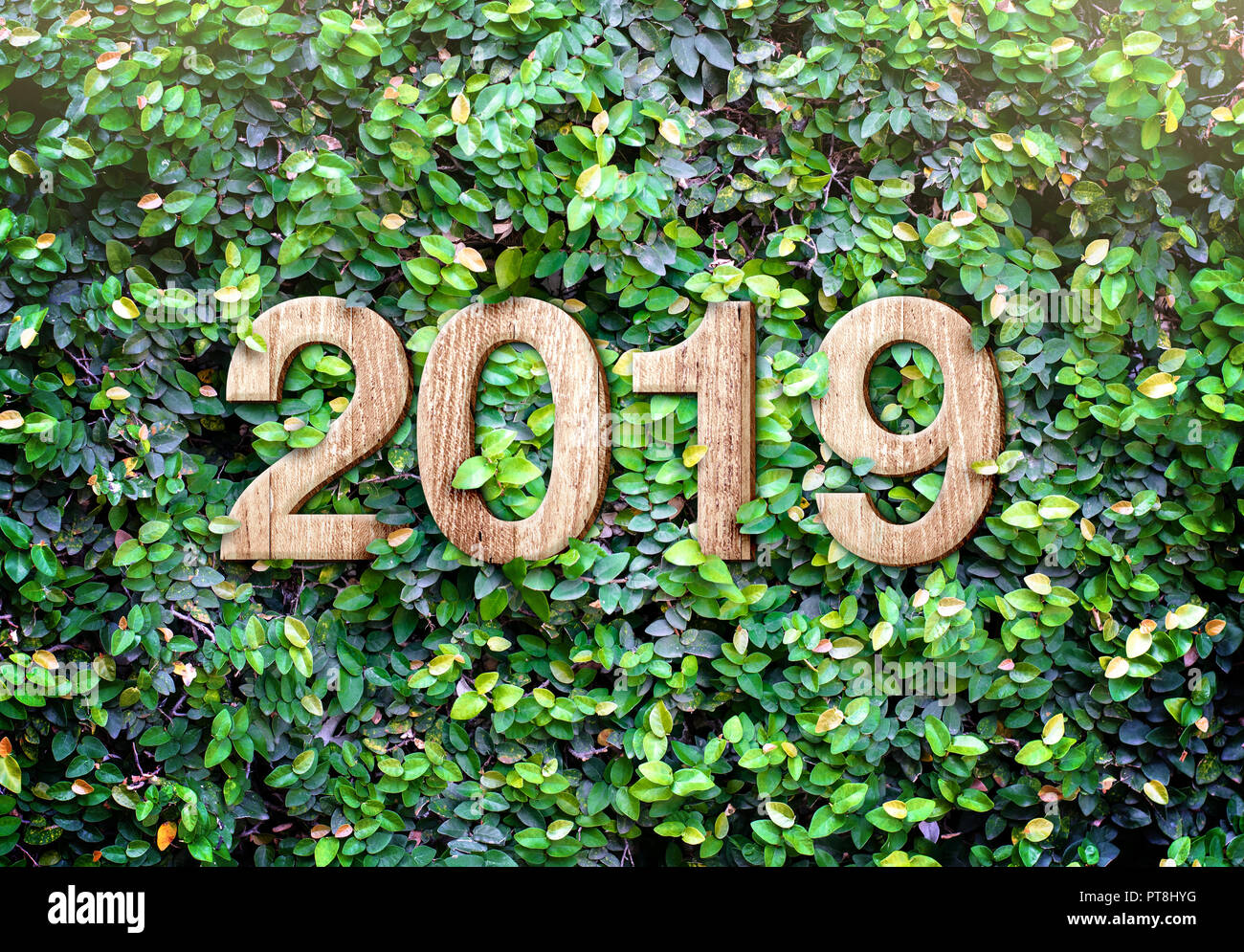 2019 happy new year wood texture number on green leaves wall background nature eco conceptorganic greeting card holidayleave copy space for adding t