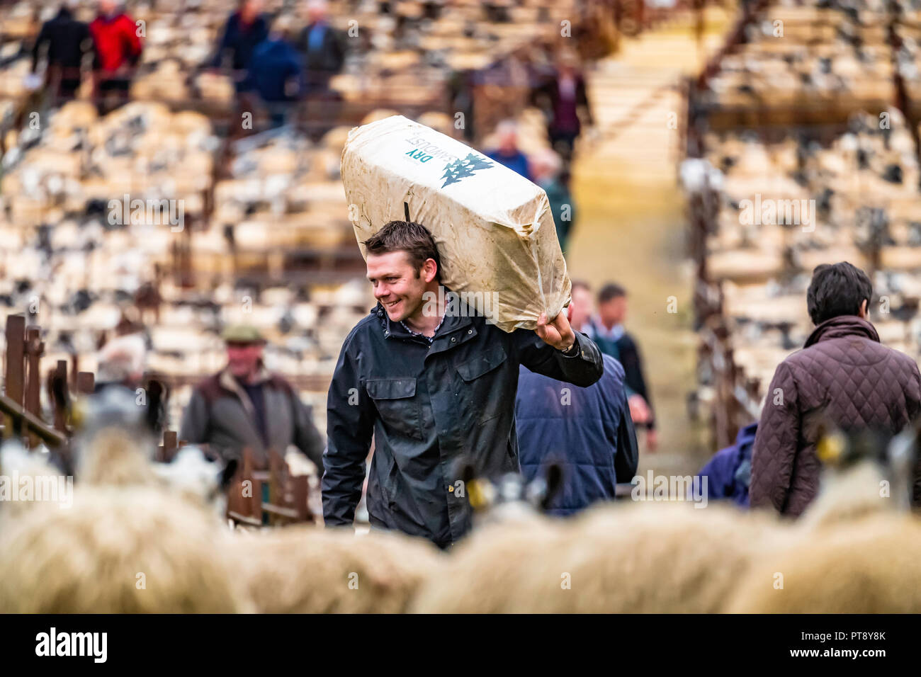 Lazonby, Penrith, Cumbria, England, UK. 3rd October 2018. The largest sheep sale in the North of England, known as the Alston Moor Sale, takes place a - Stock Image