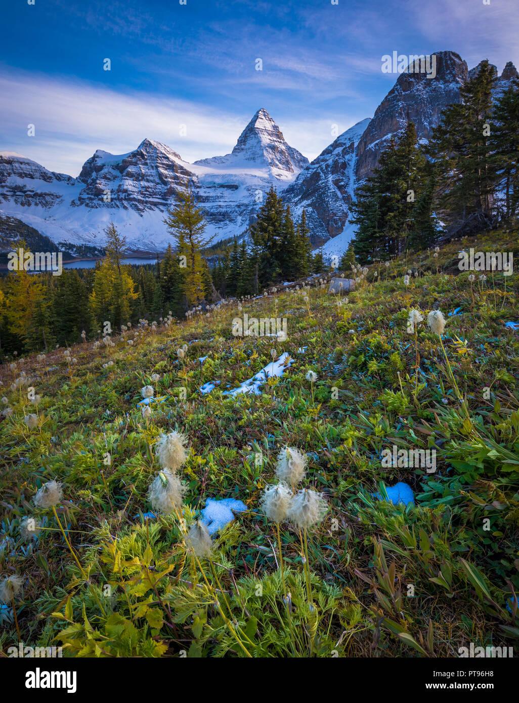 Mount Assiniboine, also known asAssiniboine Mountain, is apyramidal peakmountainlocated on theGreat Divide, on theBritish Columbia/Albertaborde - Stock Image