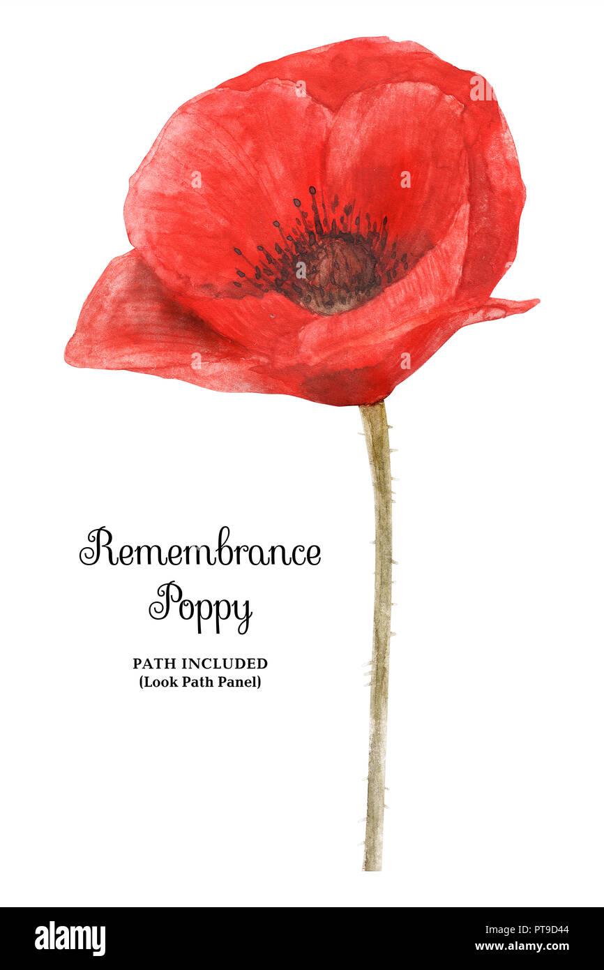 Watercolor Botanical Illustartion Remembrance Poppy Symbol Of 11