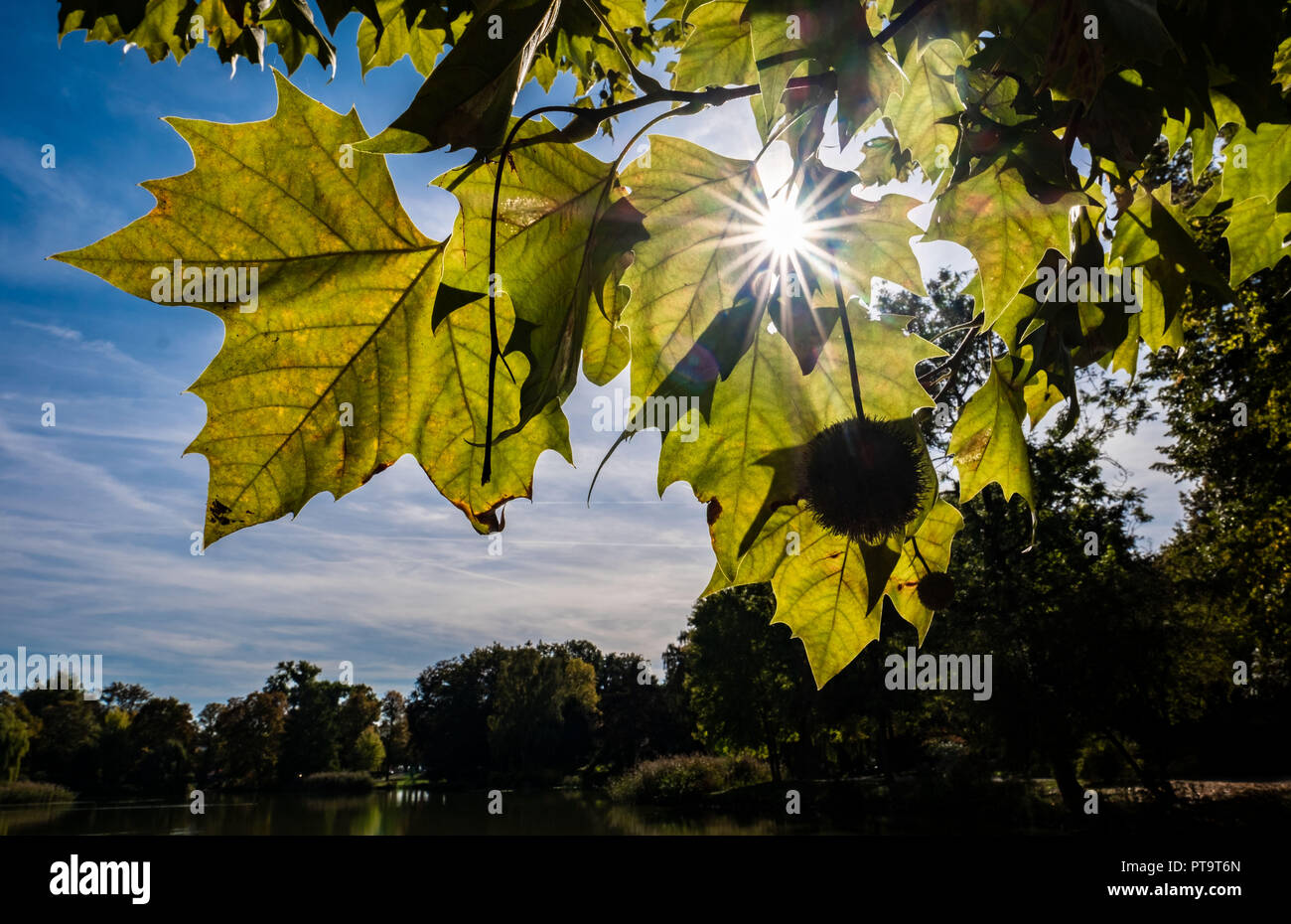 Hanover, Lower Saxony. 08th Oct, 2018. The sun glitters between the leaves of a chestnut tree at the Maschteich. Credit: Peter Steffen/dpa/Alamy Live News Stock Photo