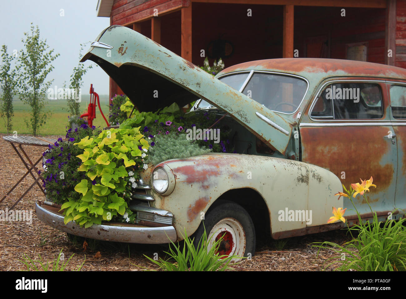 A creative planter in a vintage automobile - Stock Image
