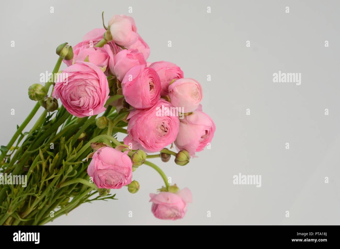 Pale Pink Flowers Wallpaper Topsimages