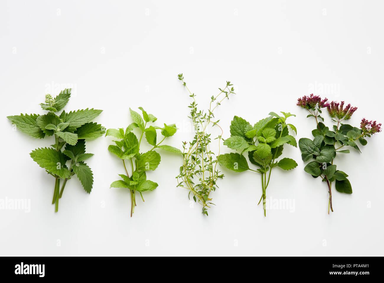 Assortment of fresh herbs (catnip, mint, thym, lemon balm and oregano) on white background. - Stock Image