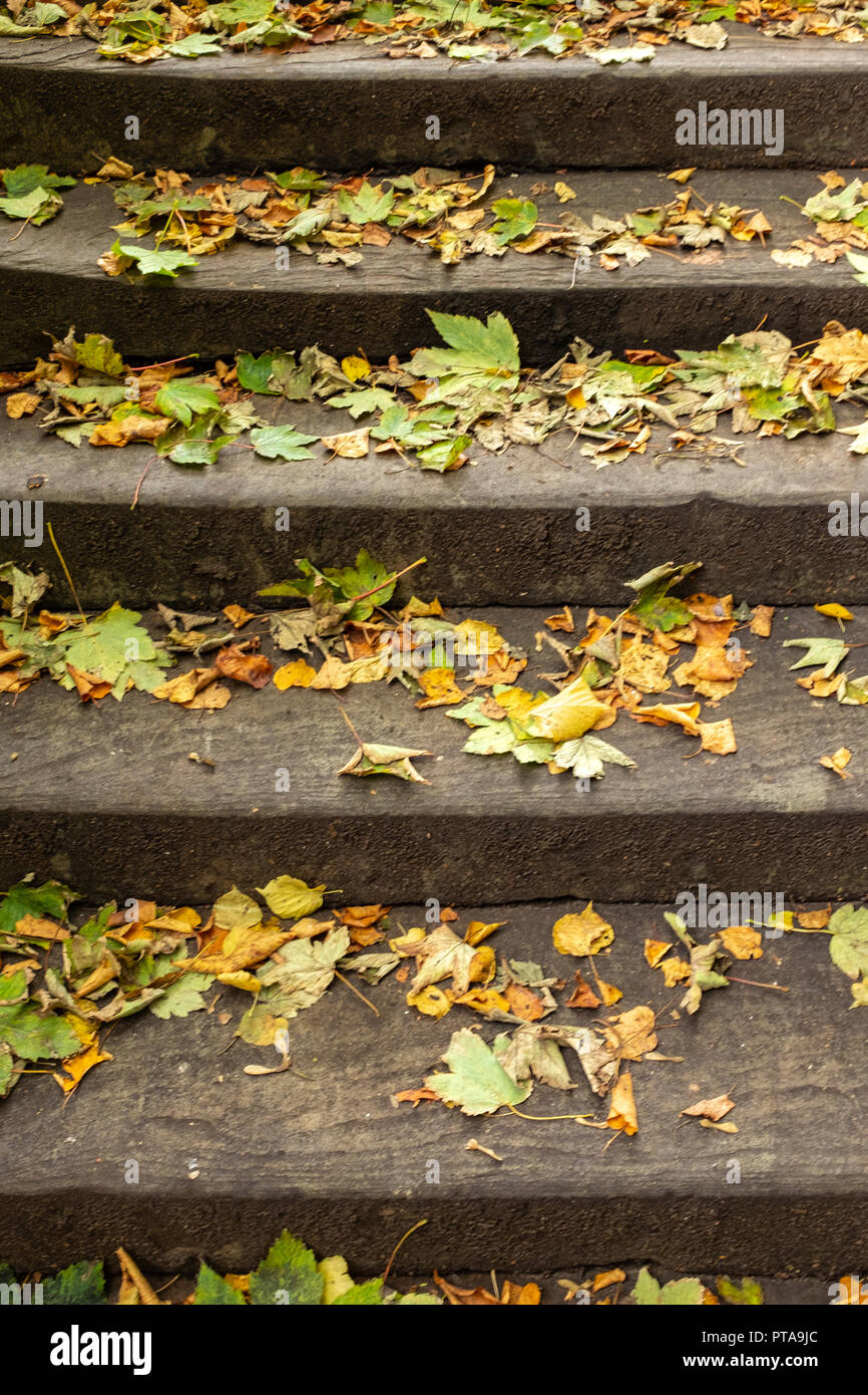 Autumn leaves on concrete steps - Stock Image
