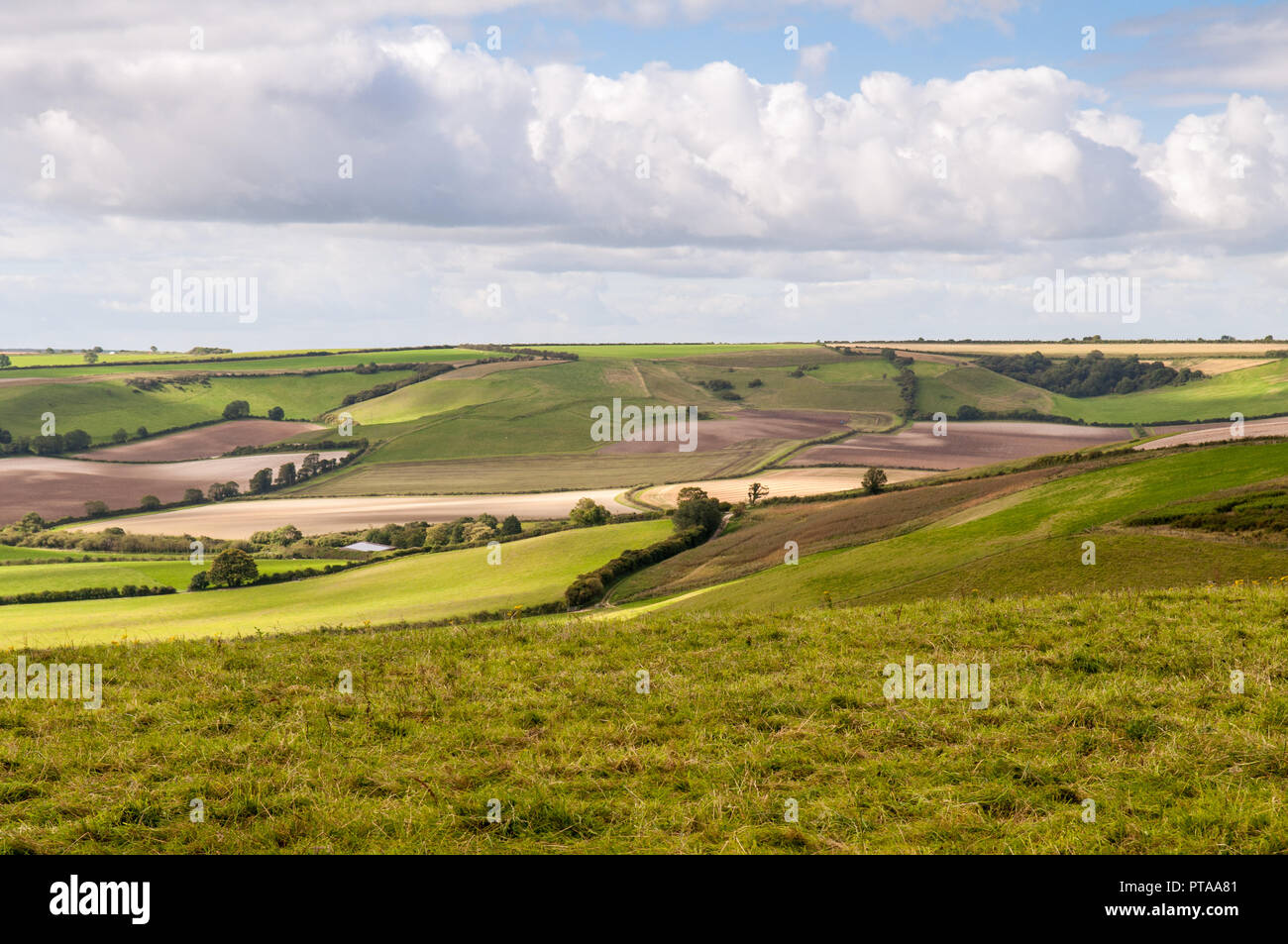 Summer sun shines on a patchwork of agricultural fields, crops and pasture near Cerne Abbas in the rolling chalk downland landscape of England's Dorse - Stock Image