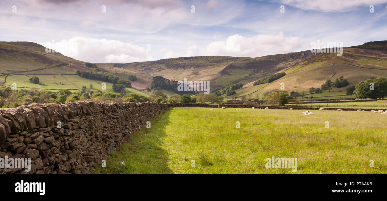 Sheep graze in fields in the valley of Edale under the high moorland of Kinder Scout in Derbyshire's Peak District national park. - Stock Image