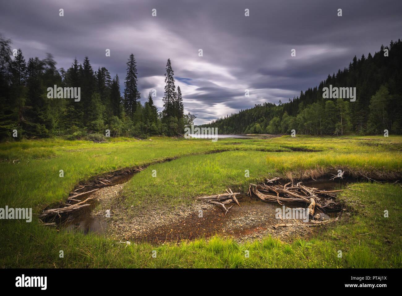 Forest area near Foldsjøen lake, summer time. - Stock Image