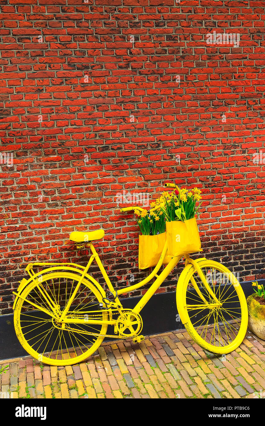 f44cbd7da29 Vintage vibrant yellow bicycle with basket of daffodil flowers on old  rustic brick wall vertical background
