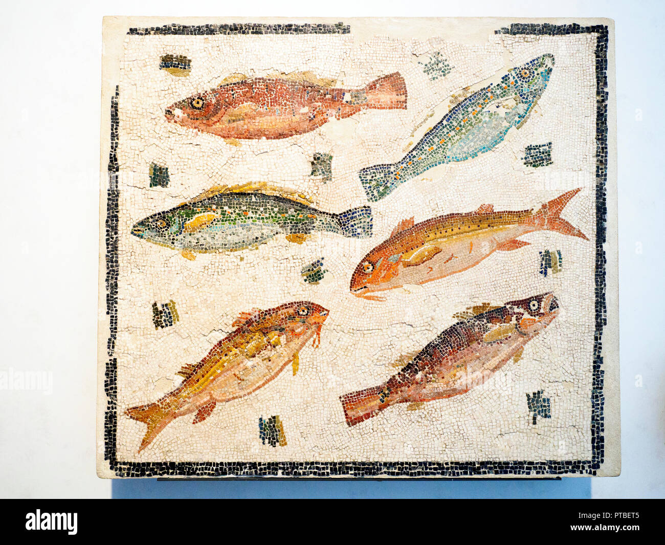 Emblem with fish unknown provenance End II - beginning III century AD -  National Roman Museum in Palazzo Massimo alle Terme - Rome, Italy - Stock Image
