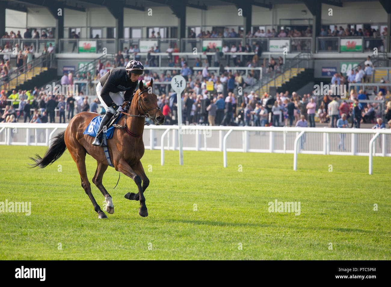 Gone Platinum (jockey Nick Scholfield) at Ffos las racecourse in Carmarthenshire - Stock Image