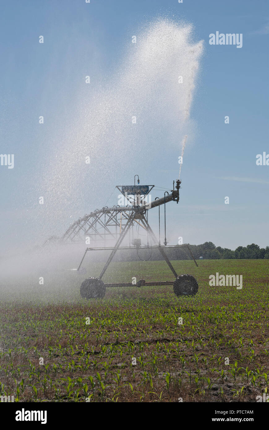 Center-pivot crop irrigation system distributes water to a corn crop in North Central Florida. - Stock Image