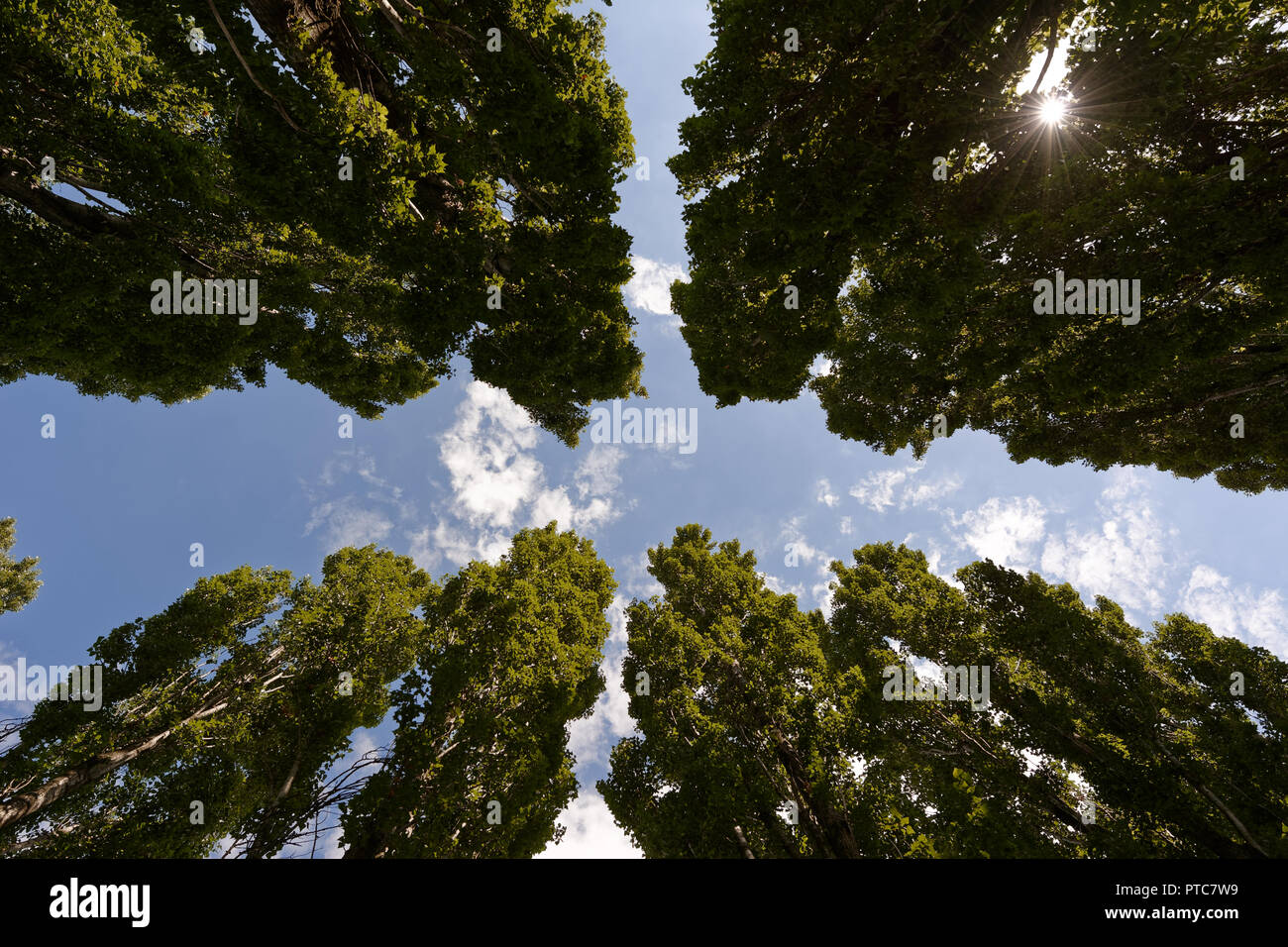Perspective view from below - Stock Image