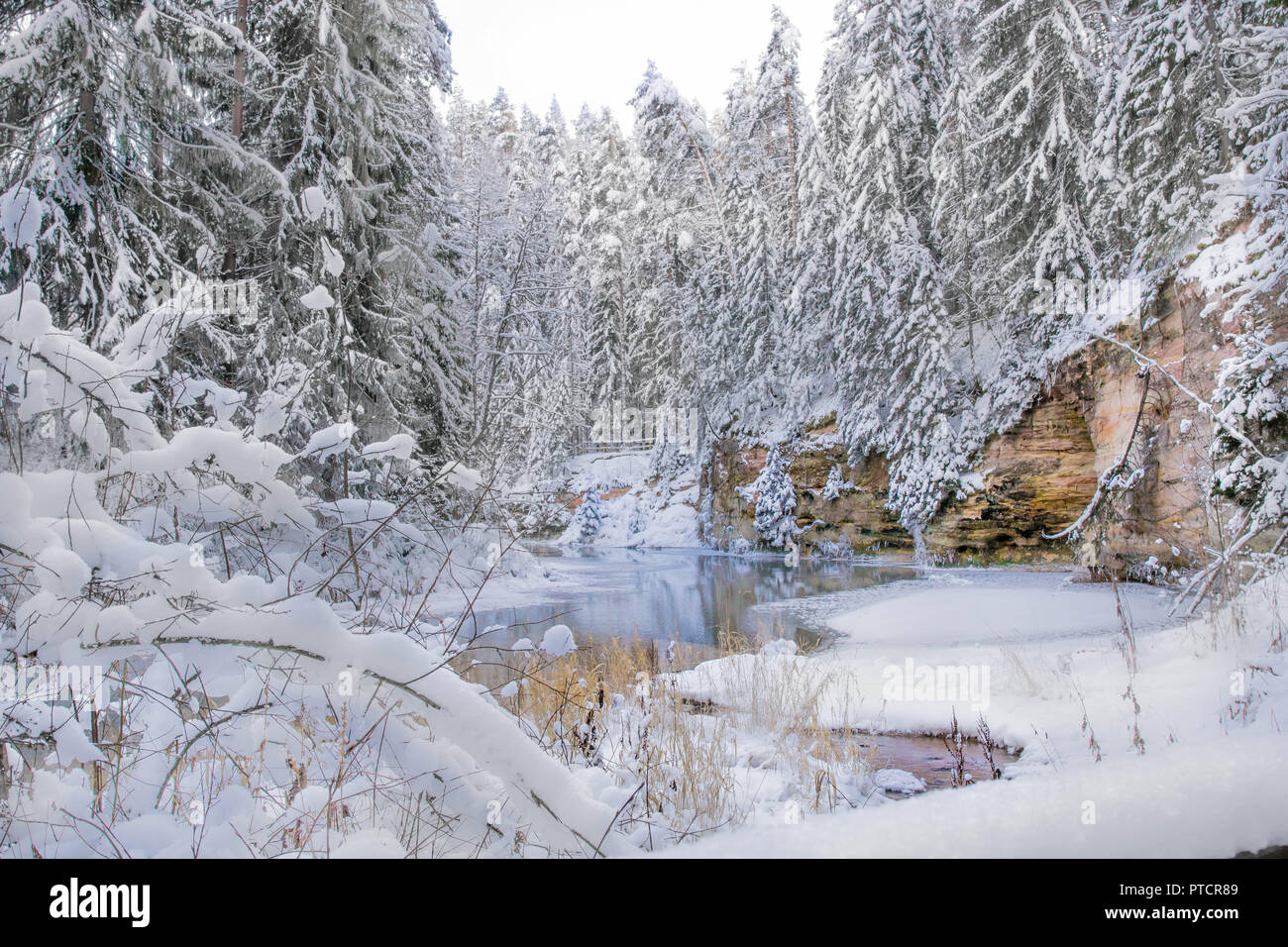 winter and tree, white sanow and cold weather in Estonia, europe - Stock Image