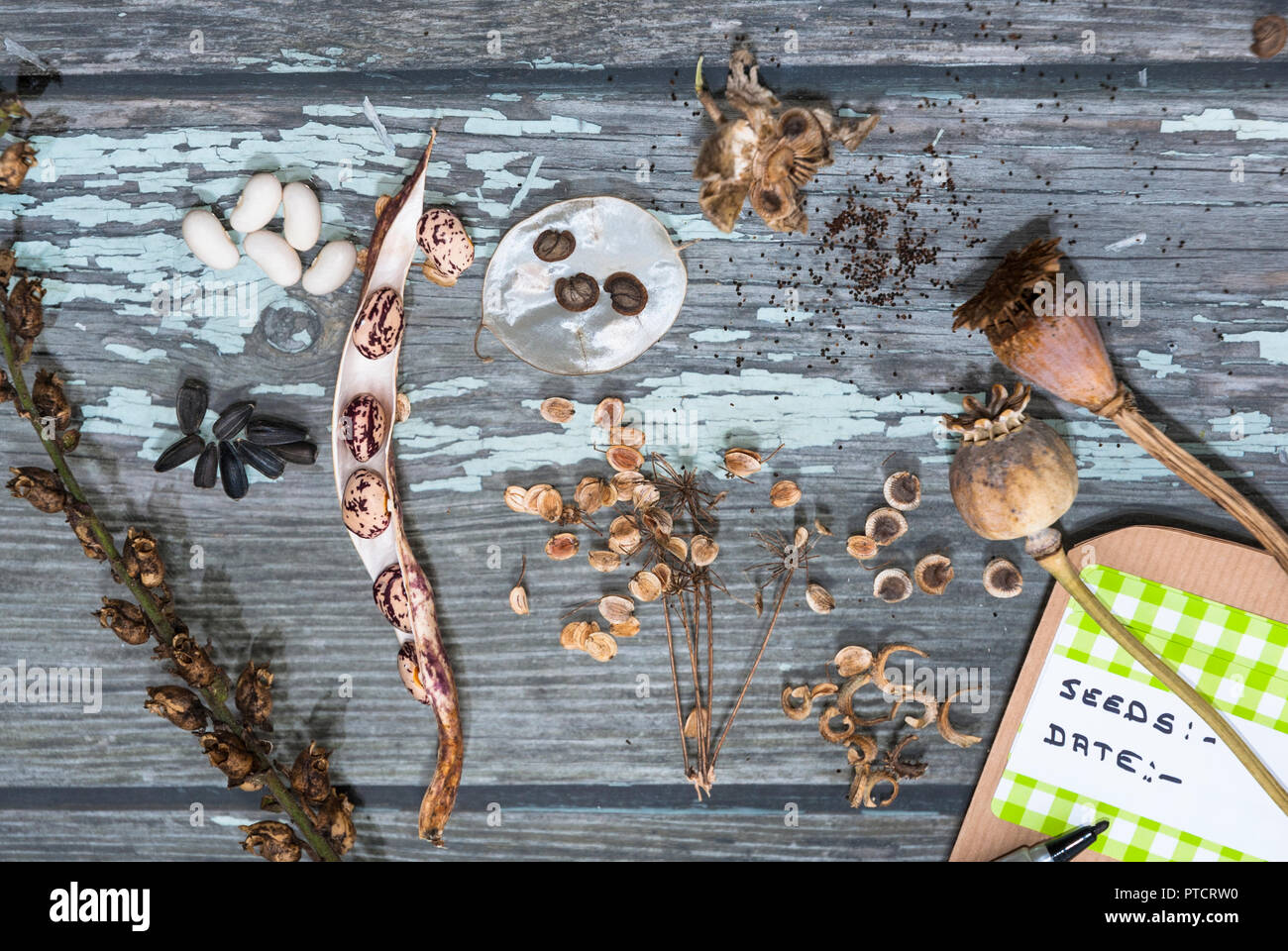 Various seeds from flowers and vegetables being selected for storing in packets for next years germination. Attractive display and shapes. - Stock Image