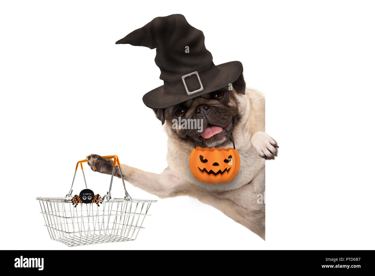 smiling pug puppy dog holding up metal grocery basket, wearing witch hat and carved pumpkin lantern, behind white banner, isolated Stock Photo
