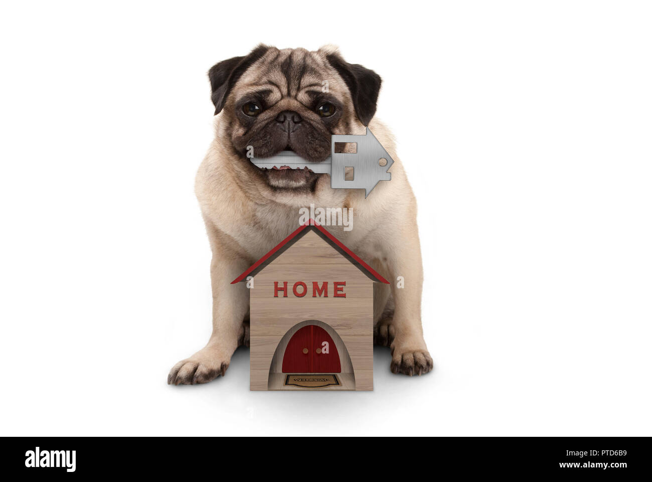 happy pug puppy dog with house key sitting down with miniature house, isolated on white background Stock Photo