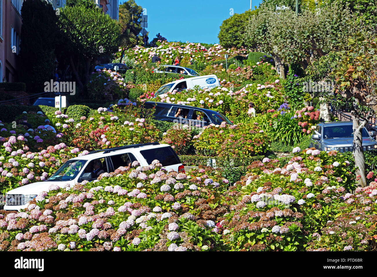 Lombard Street, the crookedest street in the workd in San Franciso, California, USA - Stock Image