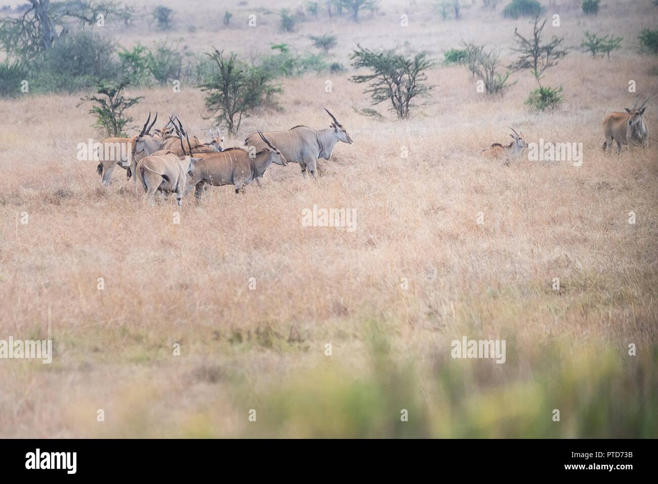 8e9b6ae521b Antelopes in the grasslands of Nairobi National Park seen during the safari  tour of U.S First Lady Melania Trump October 5