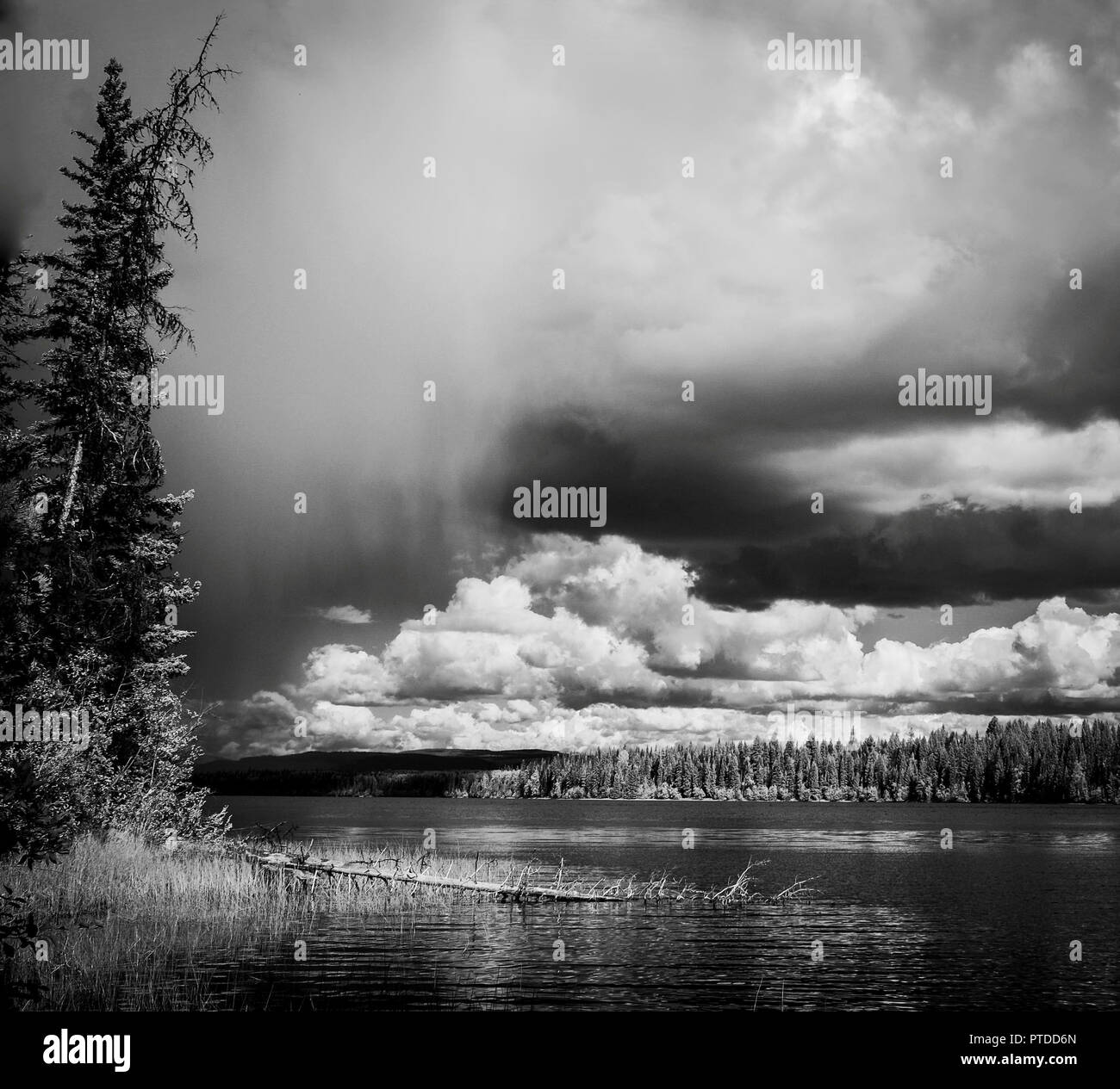 A black 'n white scene of squall moving in on a lake with trees in foreground and fluffy white clouds in the distance. - Stock Image
