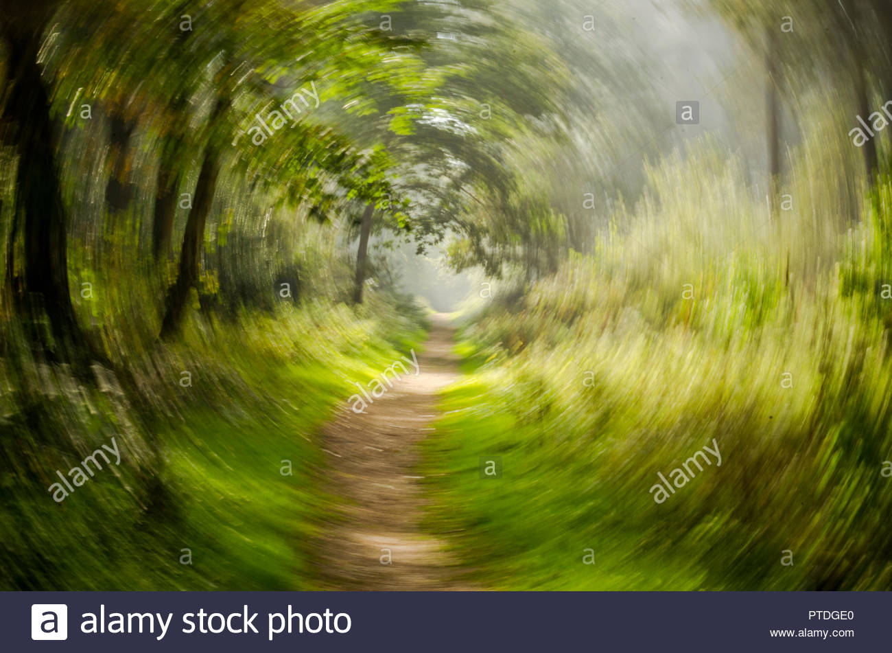Woodland walk with rotation blur - Stock Image