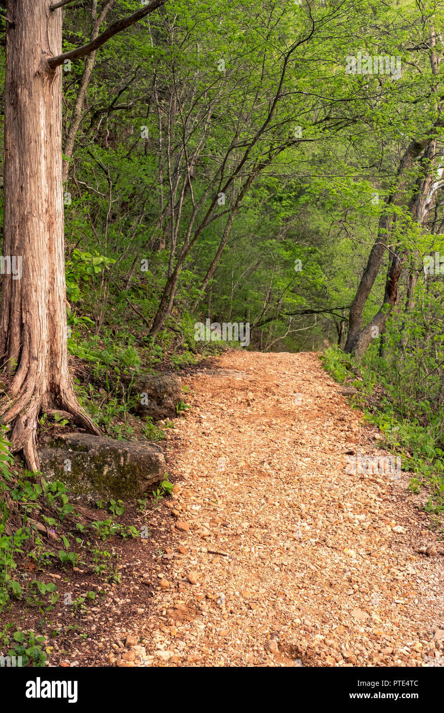 pebble trail in green forest along side water hiking trail in the woods and park Stock Photo